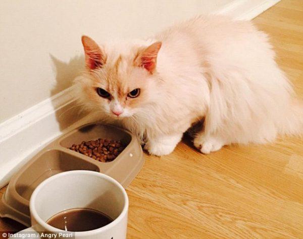kedi yemek