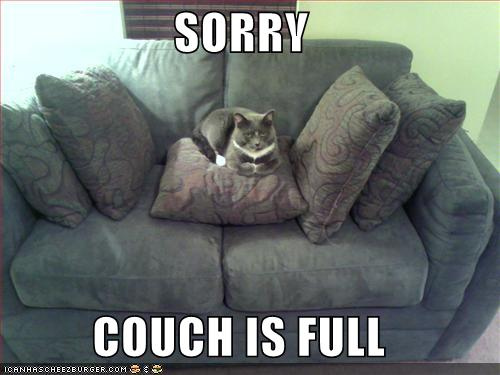 koltuk kedi