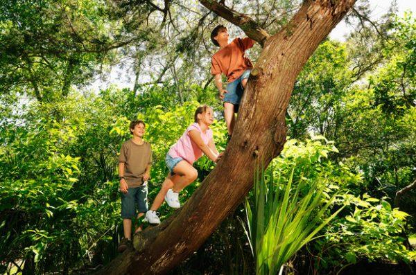 ağaç çocuk