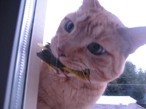 kedi kelebek