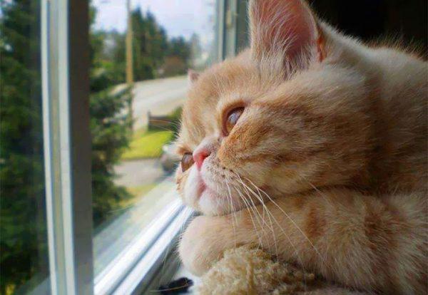 cat-waiting