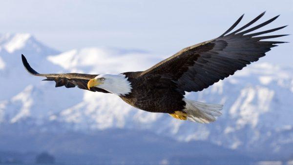 4. Yüksek tepelerde hem yılana hem kuşa rastlayabilirsiniz_ fakat biri sürünerek, öteki uçarak gelmiştir.