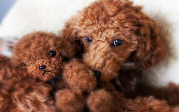 dog-and-teddy-bear-9952-1440x900__605