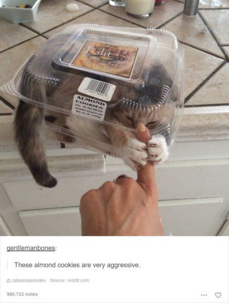 funny-tumblr-cats-17-5811ce7ac0676__700-455x600