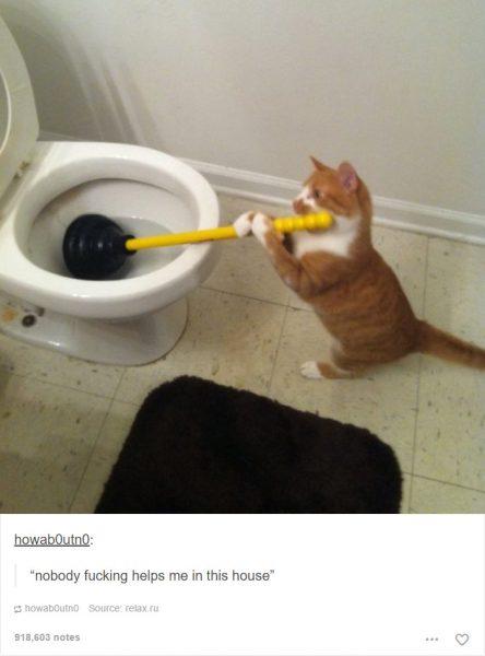 funny-tumblr-cats-2-5811ce5150f31__700-444x600