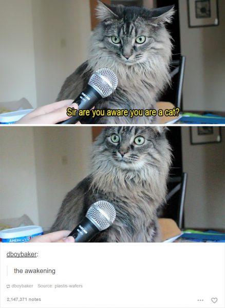funny-tumblr-cats-25-5811ce8f913ad__700-438x600