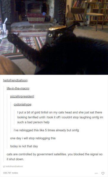 funny-tumblr-cats-31-5811cea03f61b__700-365x600