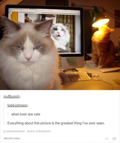funny-tumblr-cats-37-5811ceb0dc575__700-504x600