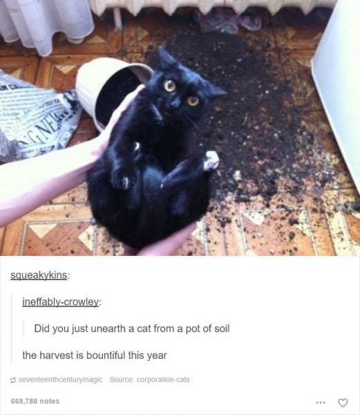 funny-tumblr-cats-40-5811ceb7e70d9__700-521x600