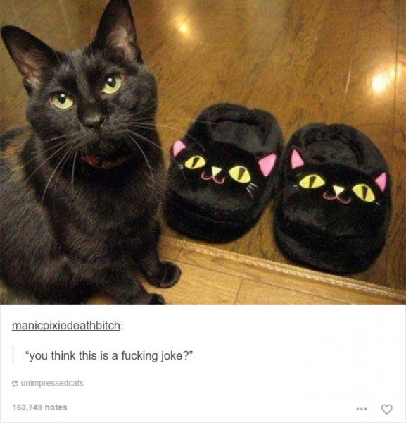 funny-tumblr-cats-49-5811ced059089__700-577x600