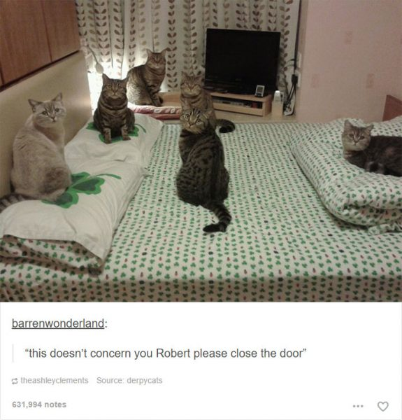 funny-tumblr-cats-50-5811ced268163__700-575x600