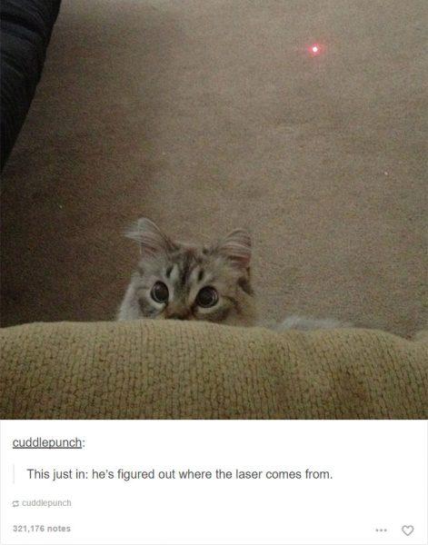 funny-tumblr-cats-51-5811ced50e020__700-471x600