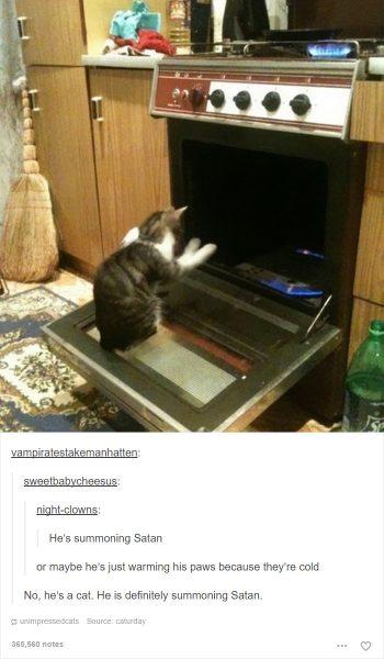funny-tumblr-cats-58-5811f437dca49__7001-350x600
