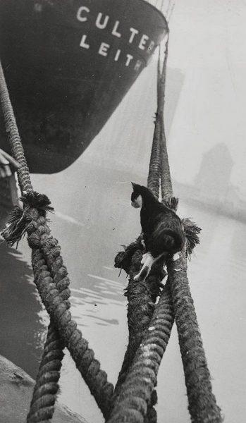 gemi-kedi
