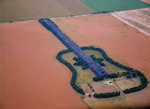 gitar-seklinde-orman
