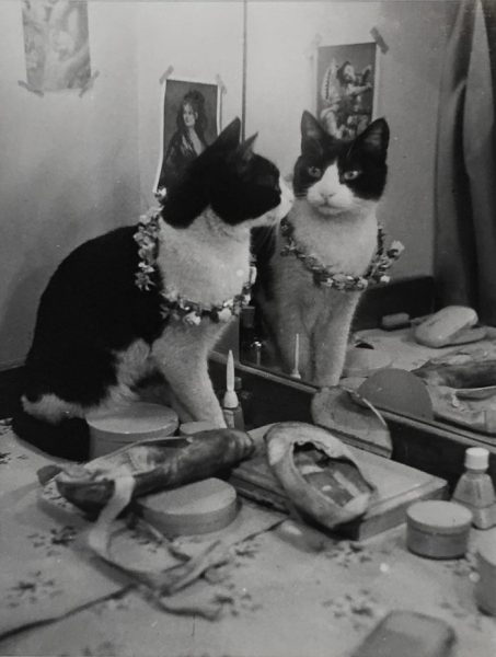 suslu-kedi