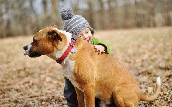 8-hayvan-sevgisi