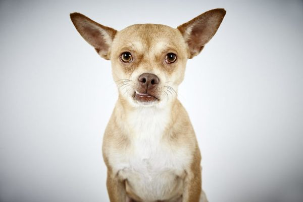 Fashion-Photographer-Helps-Abandoned-Dogs-Find-Forever-Homes-581c4765af38e-jpeg__700