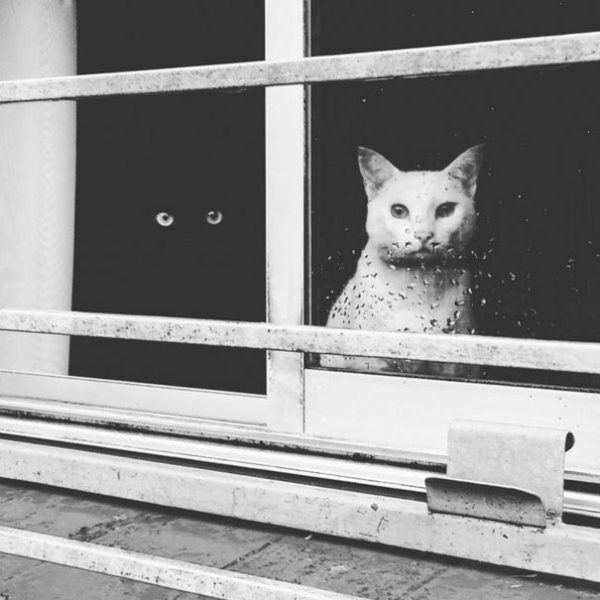 black-white-cats-yin-yang-1-58243d529fdf3__605