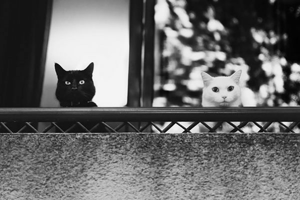 black-white-cats-yin-yang-21-58243d50305c1__605