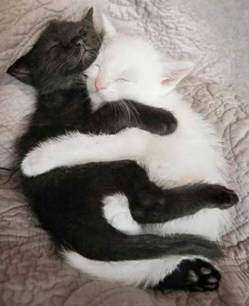 black-white-cats-yin-yang-31-58244cd9f30d2__605