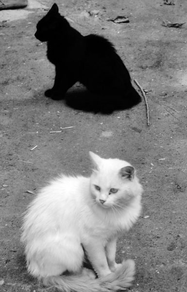 black-white-cats-yin-yang-33-58257ef6d6d8c__605