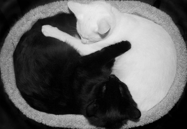 black-white-cats-yin-yang-70-5824837231803__605