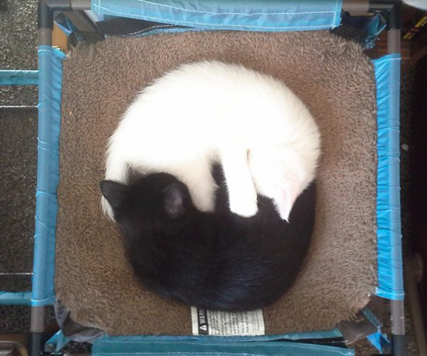 black-white-cats-yin-yang-76-58248373e1d97__605