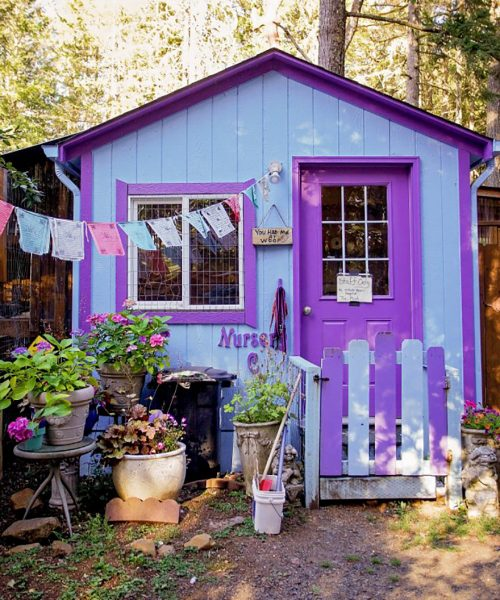dog-cottages-oregon-shelter-1a