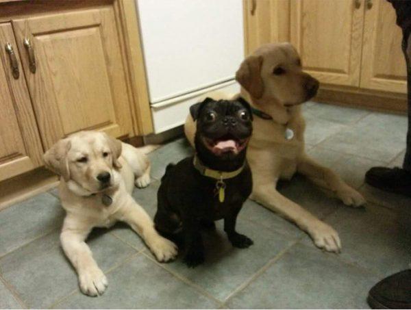 funny-tumblr-dogs-24-58131e4b733f8__700