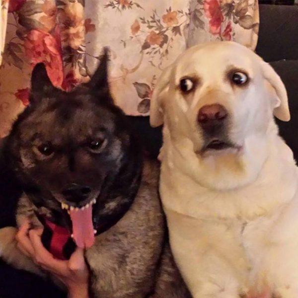 funny-tumblr-dogs-28-58131e556472b__700