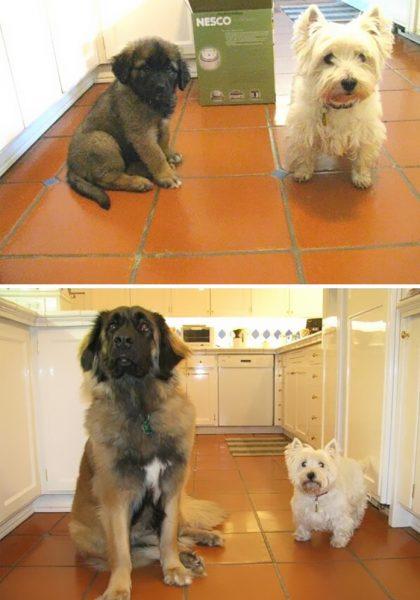 funny-tumblr-dogs-33-58131e627f998__700