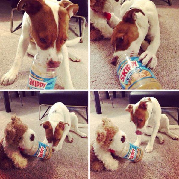 funny-tumblr-dogs-55-58131e927f651__700