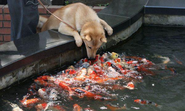 funny-tumblr-dogs-83-58131eefc9db0__700