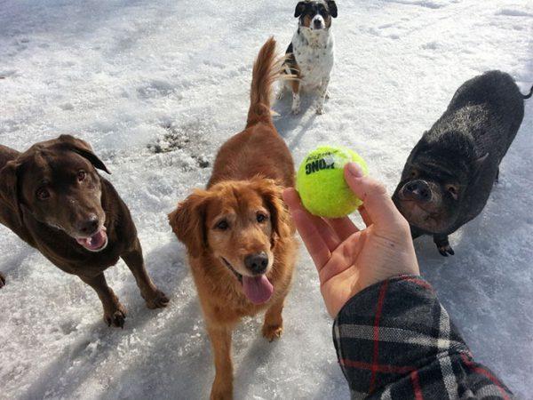 funny-tumblr-dogs-89-58131f019fff1__700