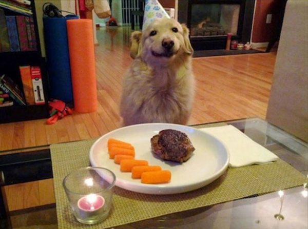 funny-tumblr-dogs-95-58134d64b9781__700