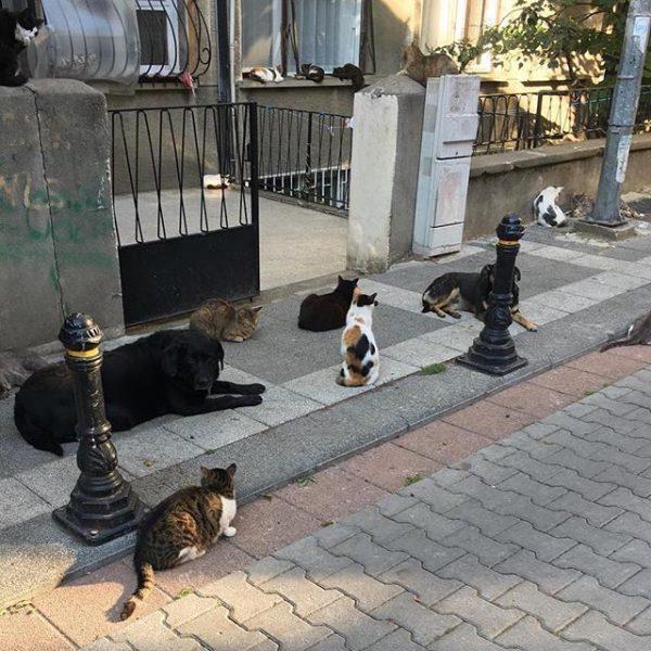 kedi-kopek-mahallede-herkesle-dost-ol-herkesle-arkadas-mahallemoda-@siiralkan