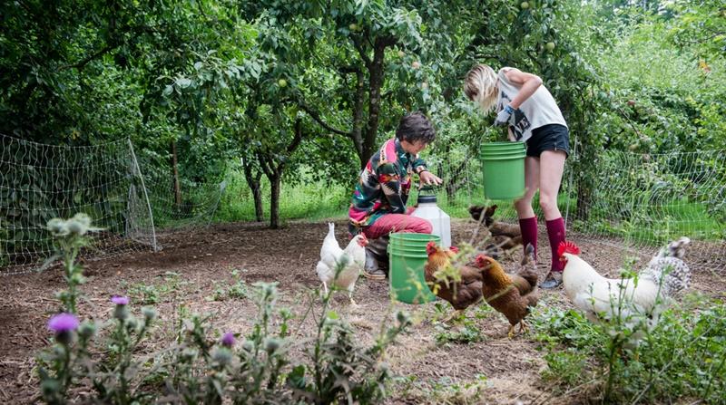 organik-çiftlikler