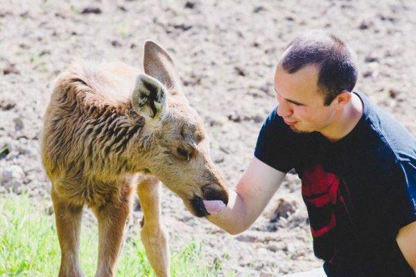 rescued-moose-visit-guy-erikas-plucas-2