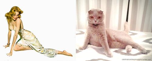 010 pinup kız kedi