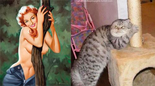 011 pinup kız kedi