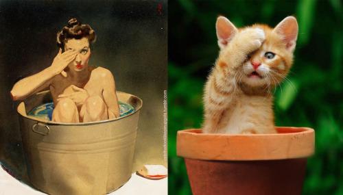 012 pinup kız kedi