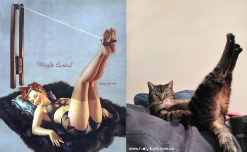 013 pinup kız kedi