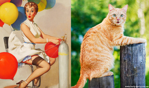 019 pinup kız kedi