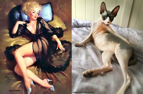 023 pinup kız kedi