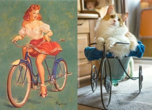 025 pinup kız kedi