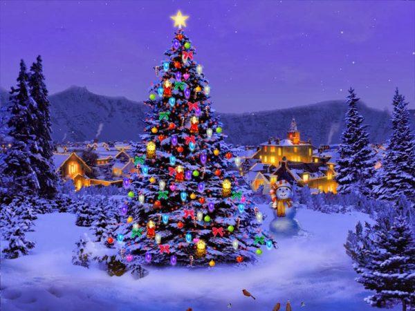 11. Çam Ağacından Noel Ağacına