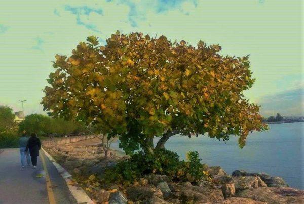 3. Ağaç