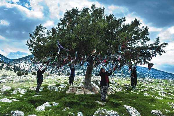 9. Hayat Ağacı ya da Dilek Ağacı