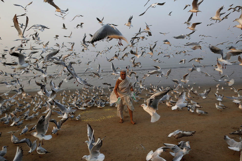 A man feeds seagulls on a beach along the Arabian Sea in Mumbai, India, February 9, 2016.